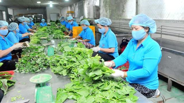 Kinh tế tập thể thu hút hơn 3 triệu lao động, đóng góp 4,8% GDP cả nước - Ảnh 1.