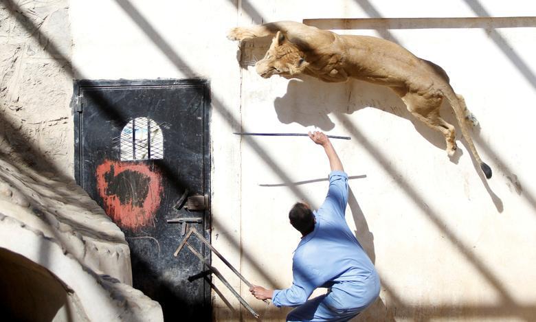 Những bức ảnh hài hước về động vật năm 2020 - Ảnh 9.