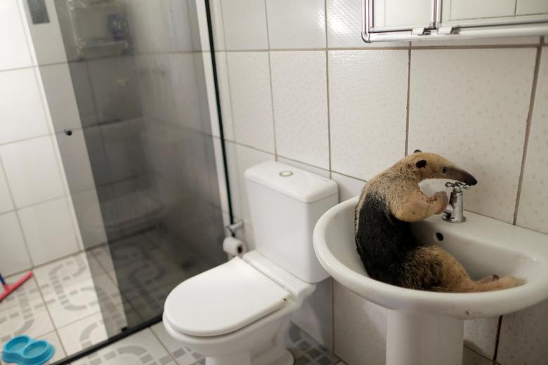 Những bức ảnh hài hước về động vật năm 2020 - Ảnh 3.