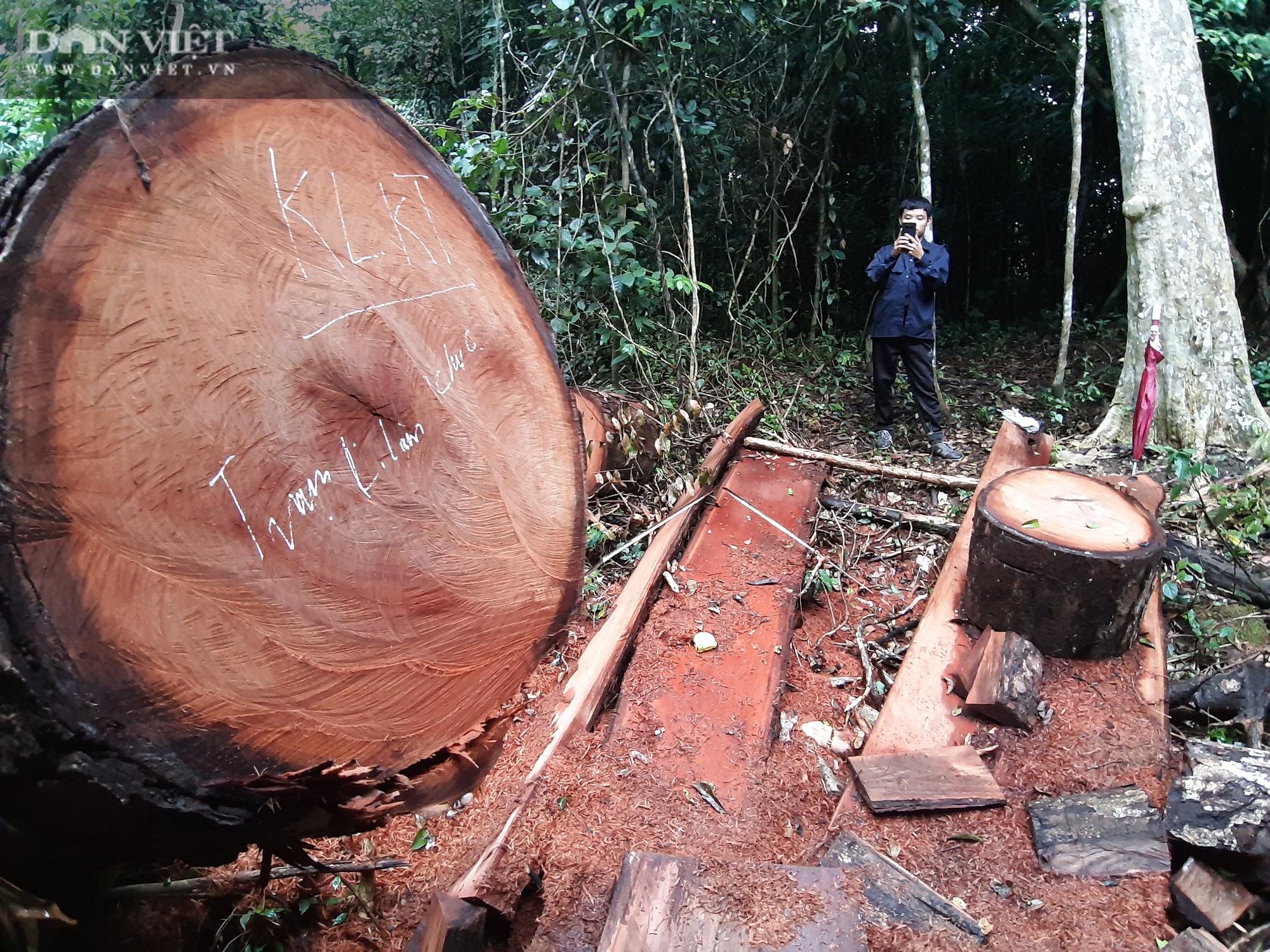 Khởi tố vụ án phá rừng tại rừng đặc dụng Na Hang - Ảnh 4.