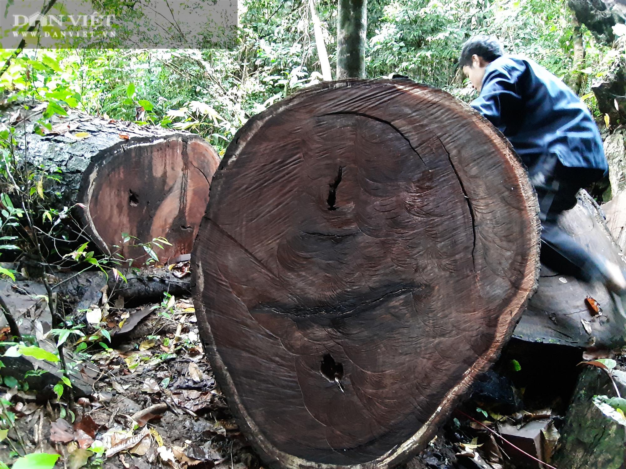 Khởi tố vụ án phá rừng tại rừng đặc dụng Na Hang - Ảnh 3.
