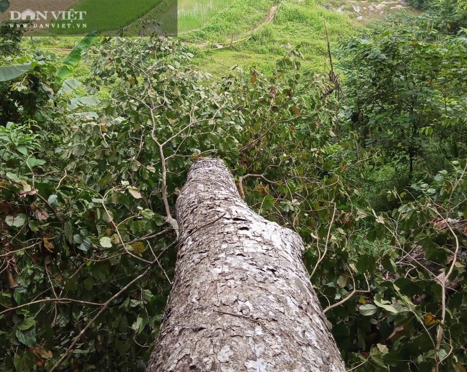 Khởi tố vụ án phá rừng tại rừng đặc dụng Na Hang - Ảnh 2.