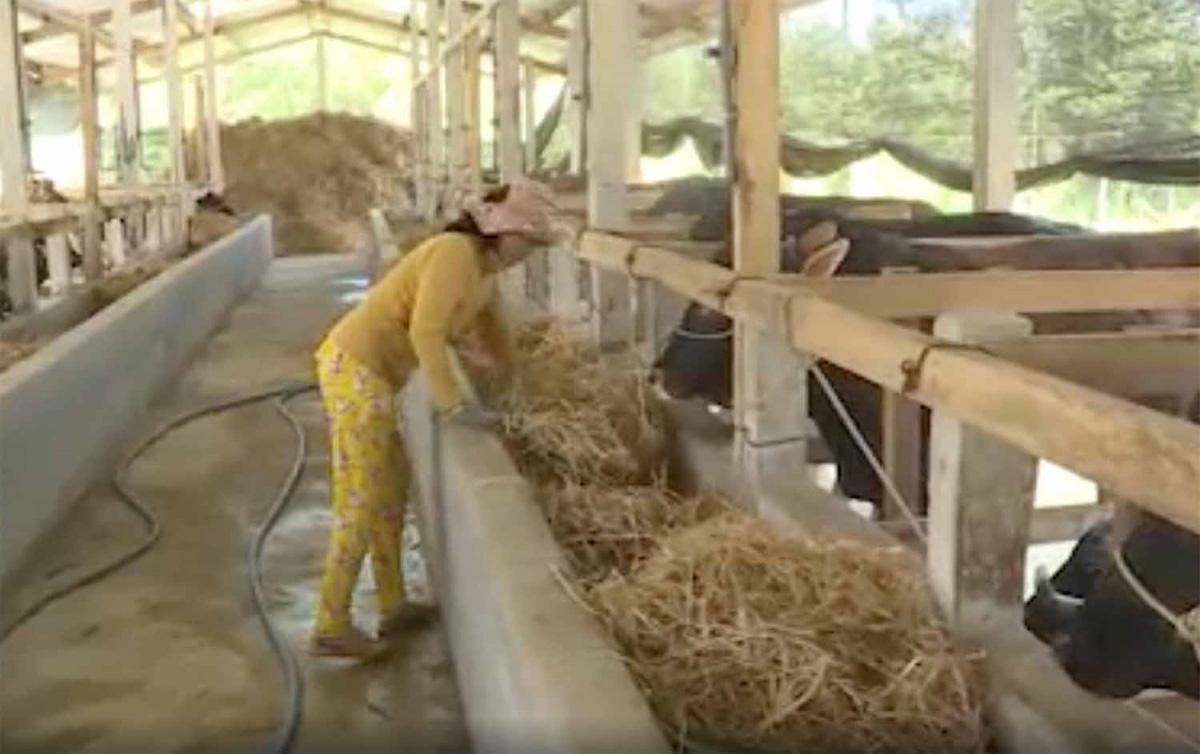 Thu nghìn tỷ từ chăn nuôi bò thịt chất lượng cao - Ảnh 1.