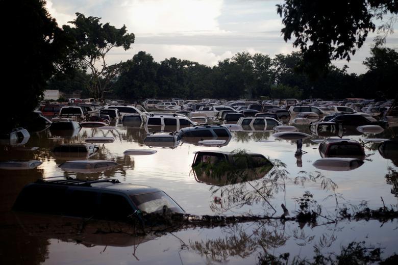 Châu chấu bay phủ kín nhiều cánh đồng tại Châu Phi lọt top ảnh môi trường năm 2020 - Ảnh 15.