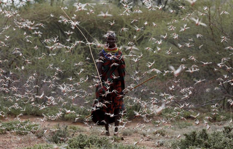 Châu chấu bay phủ kín nhiều cánh đồng tại Châu Phi lọt top ảnh môi trường năm 2020 - Ảnh 2.