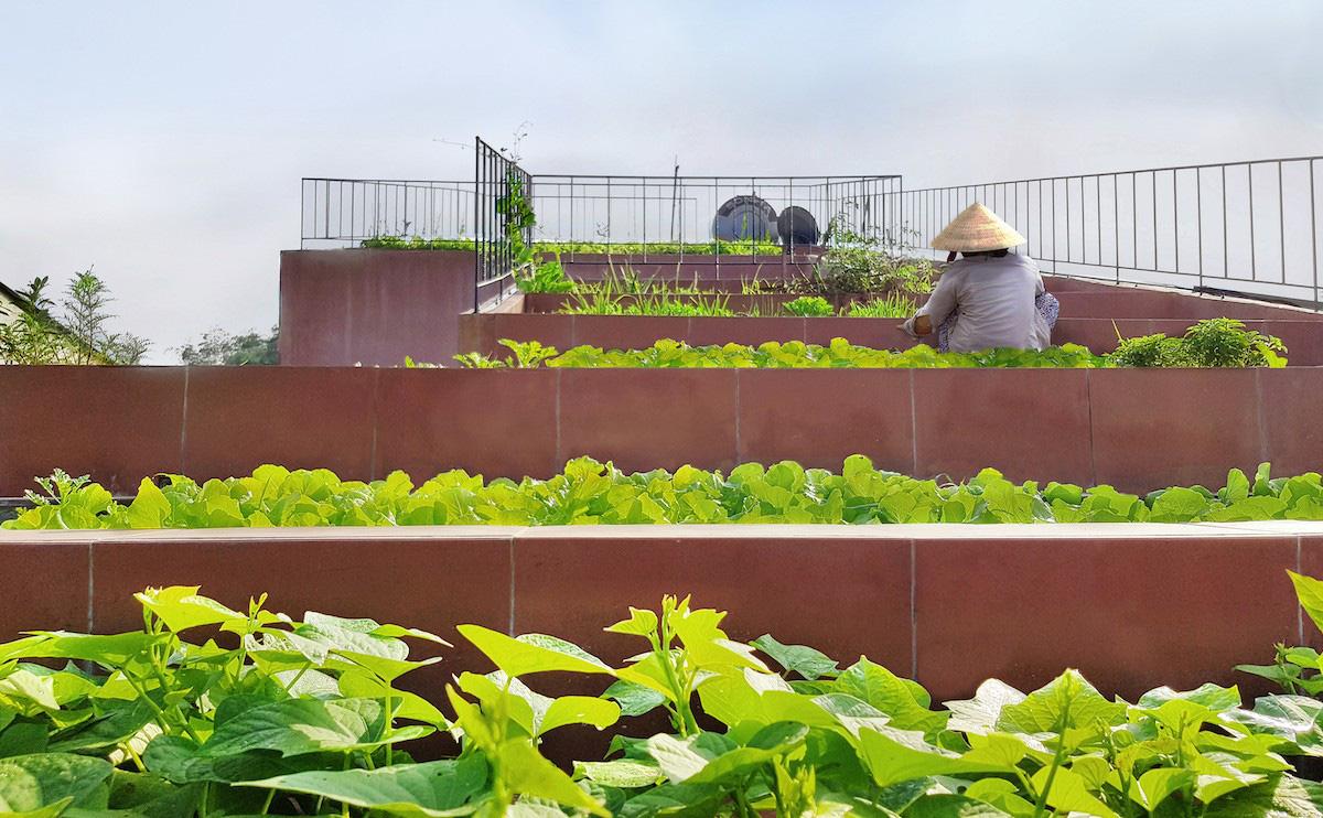 Ngôi nhà tại Việt Nam có 7 bậc thang trồng rau trên mái được quốc tế vinh danh - Ảnh 4.