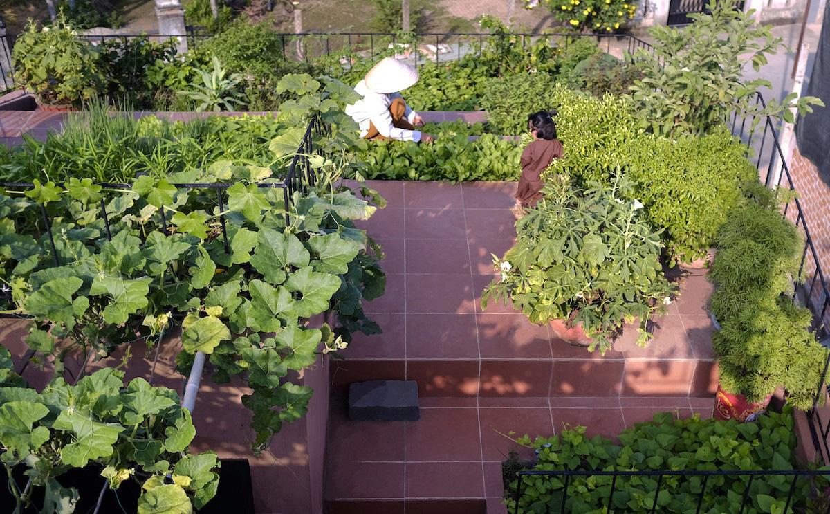 Ngôi nhà tại Việt Nam có 7 bậc thang trồng rau trên mái được quốc tế vinh danh - Ảnh 5.