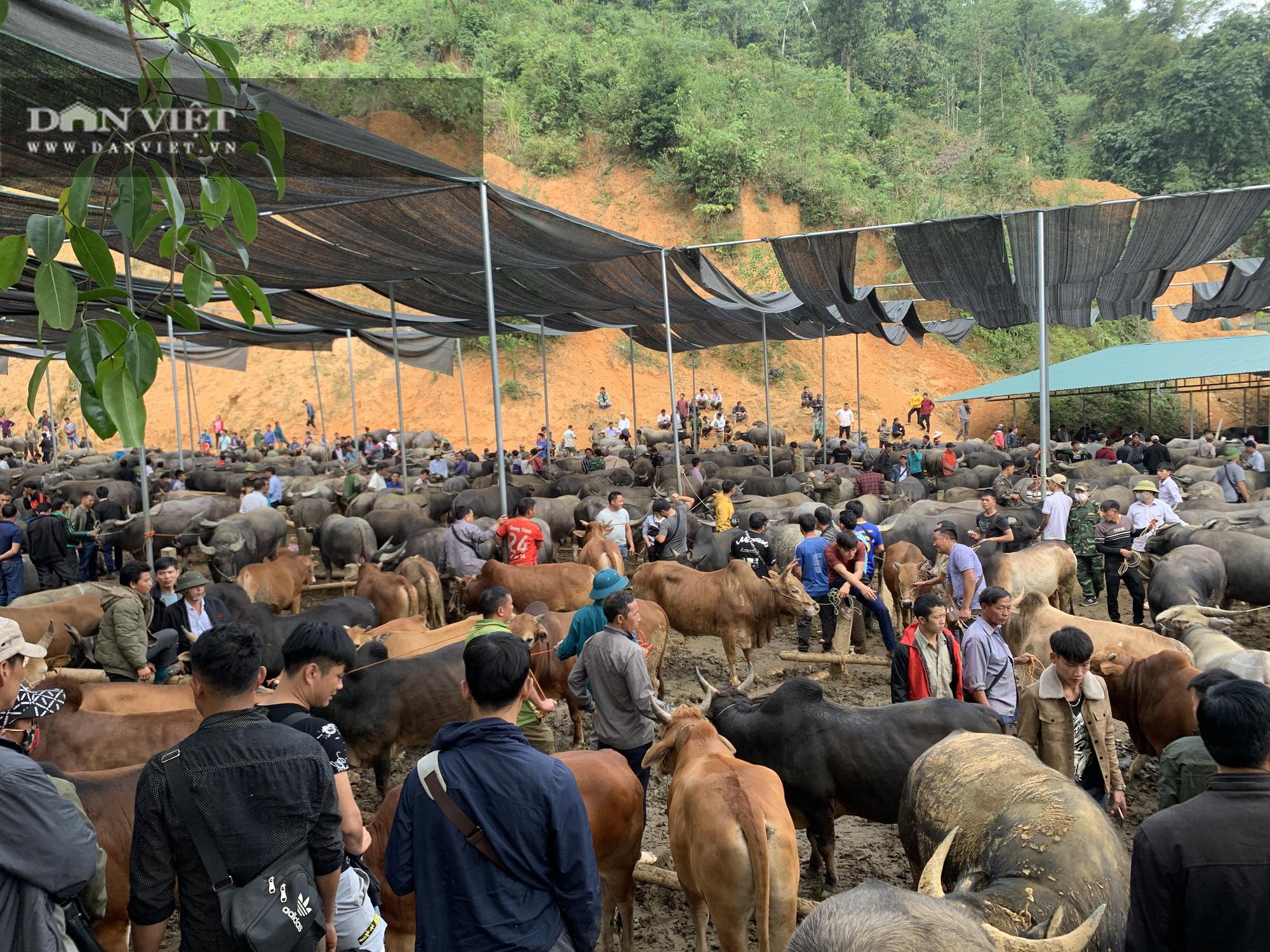 Bắc Kạn khó khăn trong công tác kiểm soát dịch bệnh tại chợ trâu, bò Nghiên Loan - Ảnh 1.