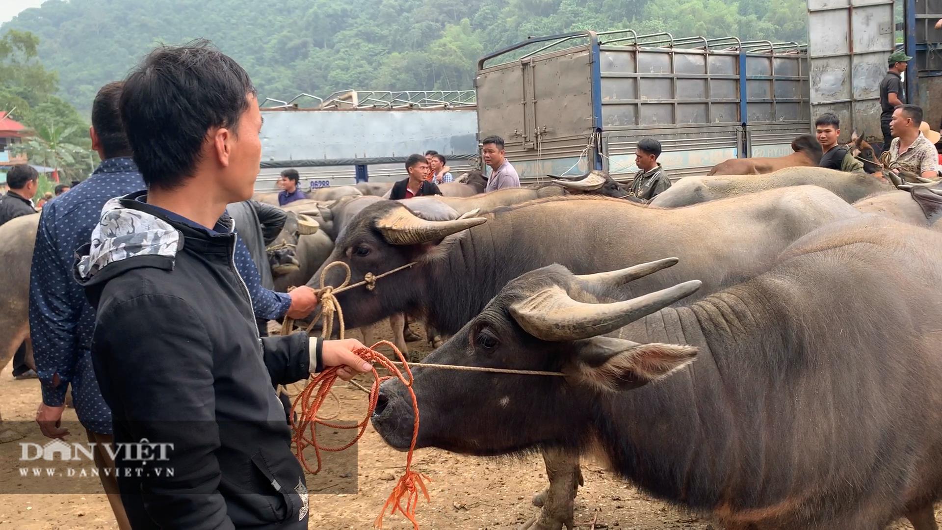 Bắc Kạn khó khăn trong công tác kiểm soát dịch bệnh tại chợ trâu, bò Nghiên Loan - Ảnh 4.