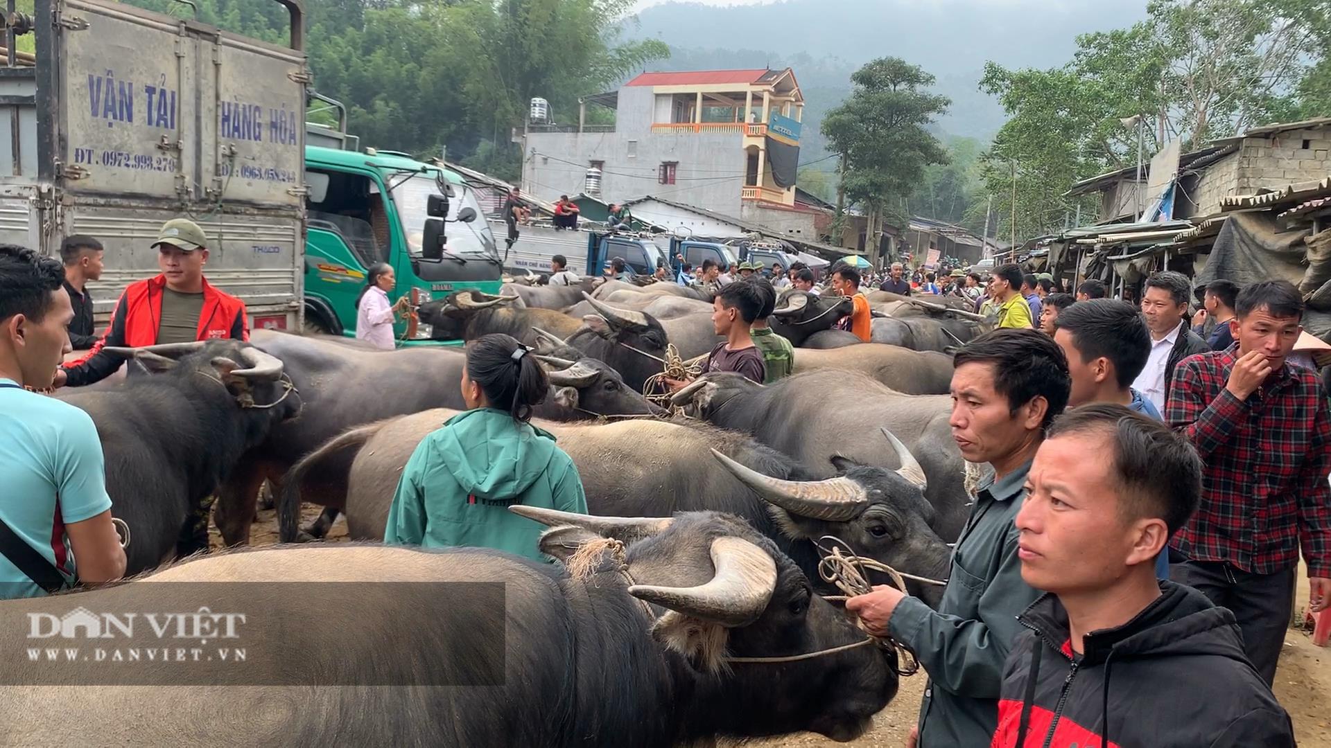 Bắc Kạn khó khăn trong công tác kiểm soát dịch bệnh tại chợ trâu, bò Nghiên Loan - Ảnh 3.