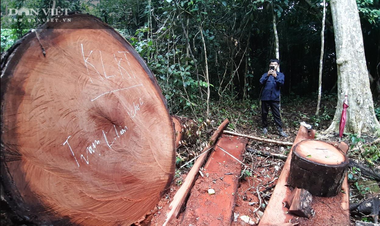 Vụ phá rừng đặc dụng tại Na Hang: Trường hợp nào Kiểm lâm được khởi tố vụ án hình sự? - Ảnh 1.