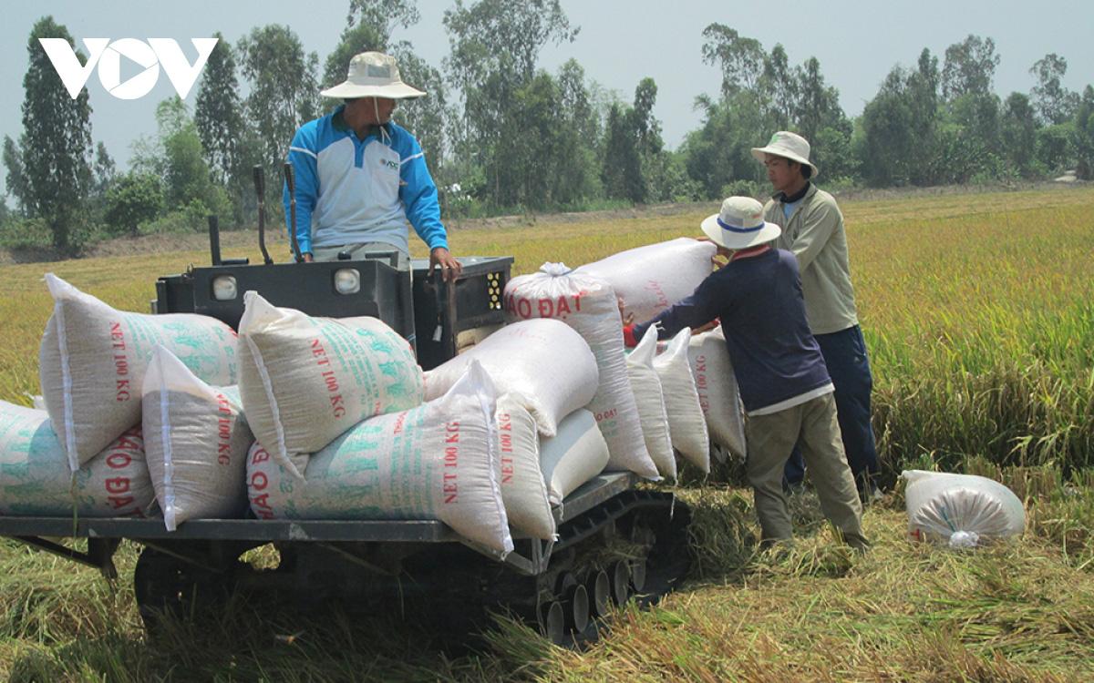 Giá gạo xuất khẩu của Việt Nam tăng cao kỷ lục - Ảnh 1.