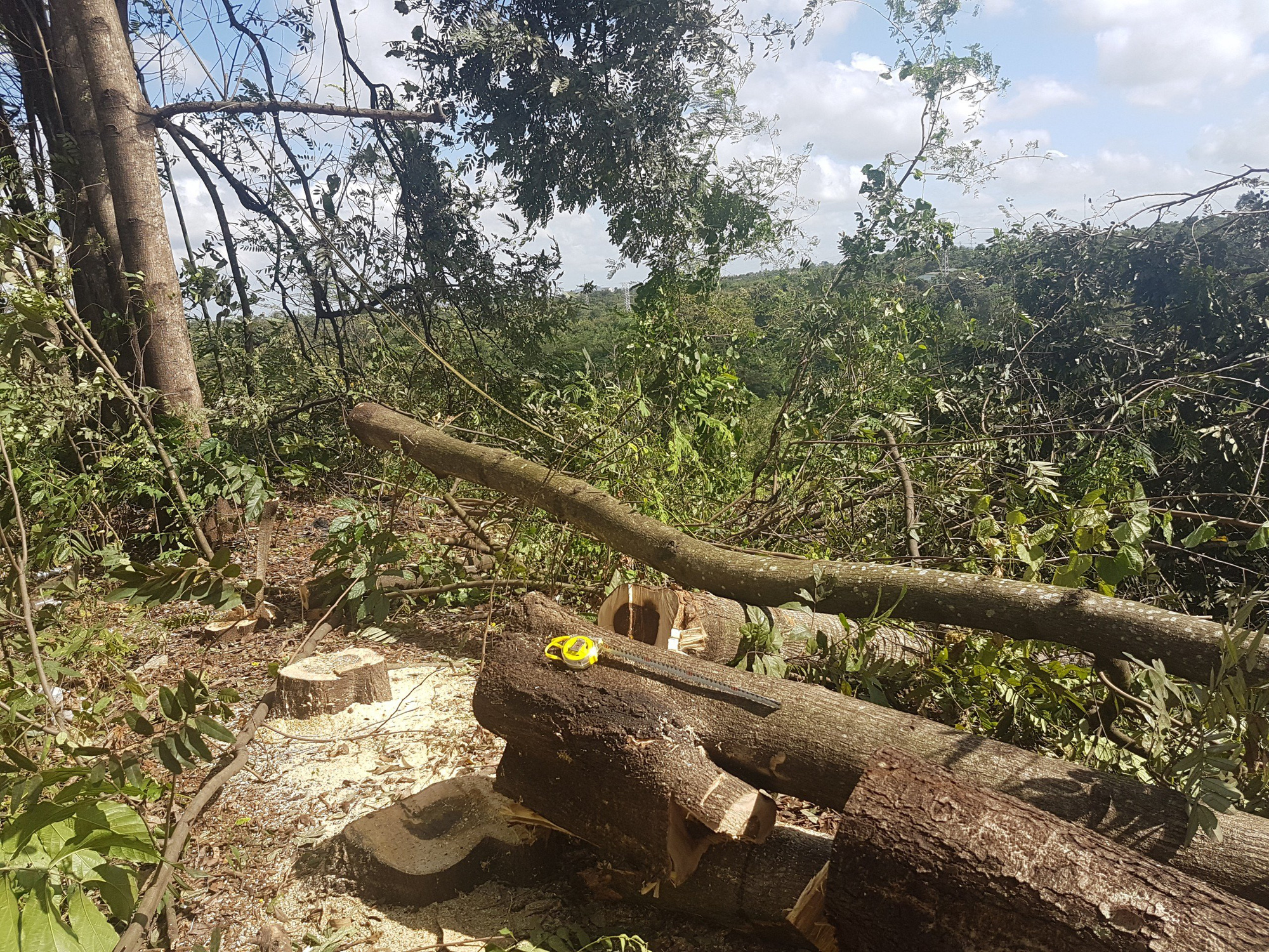 """Vụ chặt hơn 200 cây xanh trong KCN: """"Có dấu hiệu cố ý làm trái"""" - Ảnh 2."""