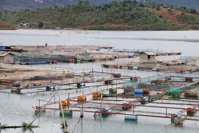 Nông dân Quỳnh Nhai khấm khá nhờ nghề nuôi cá lồng - Ảnh 8.
