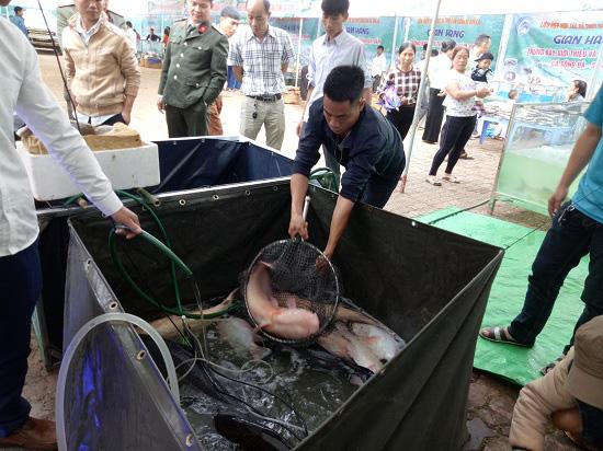 Nông dân Quỳnh Nhai khấm khá nhờ nghề nuôi cá lồng - Ảnh 3.