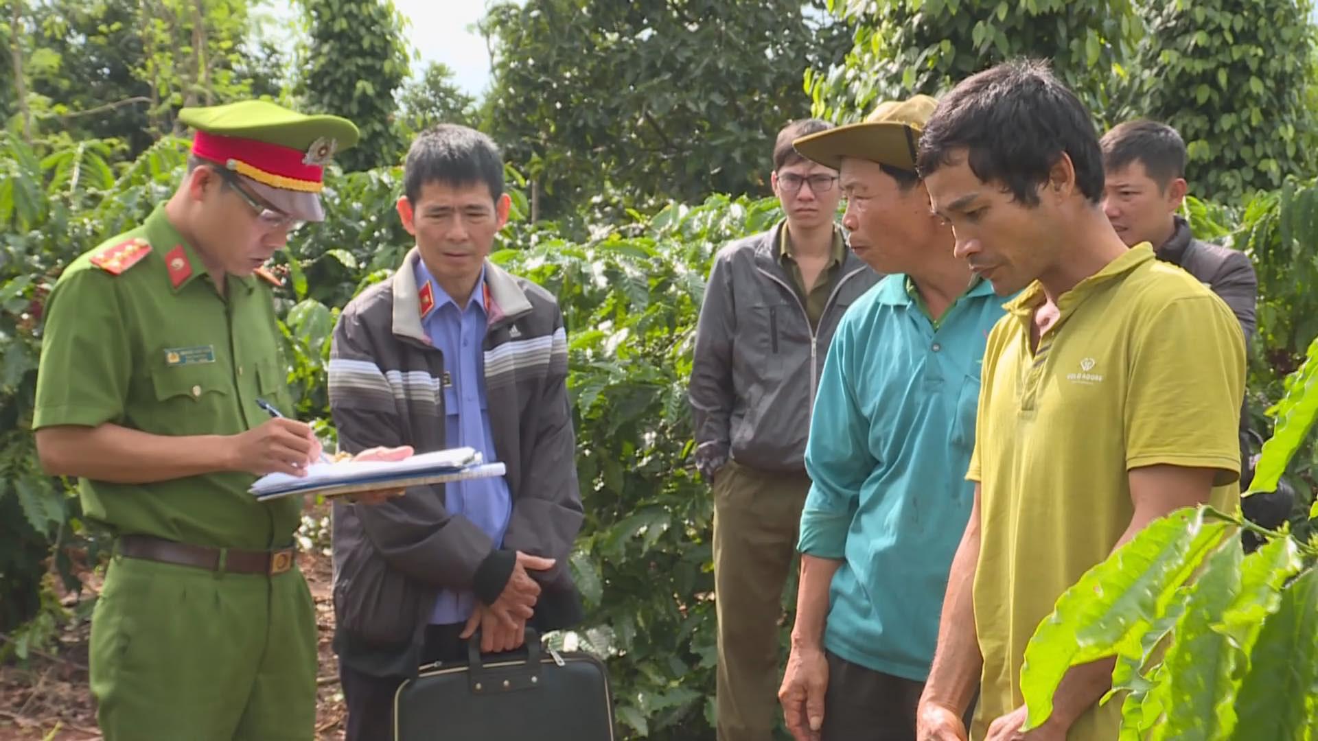 Đắk Lắk: Bắt đối tượng phá hoại cây trồng của người dân  - Ảnh 1.