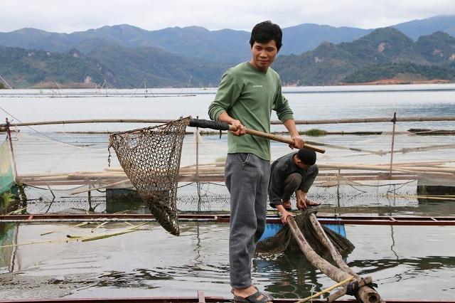 Nông dân Quỳnh Nhai khấm khá nhờ nghề nuôi cá lồng - Ảnh 5.