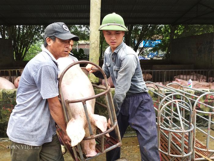 Giá lợn hơi hôm nay (29/11) - Ảnh 1.