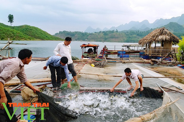 Nông dân Quỳnh Nhai khấm khá nhờ nghề nuôi cá lồng - Ảnh 4.