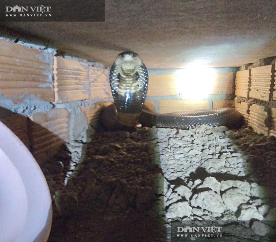 Có gì bên trong trại nuôi rắn hổ mang quy mô lớn ở tỉnh Sóc Trăng? - Ảnh 4.