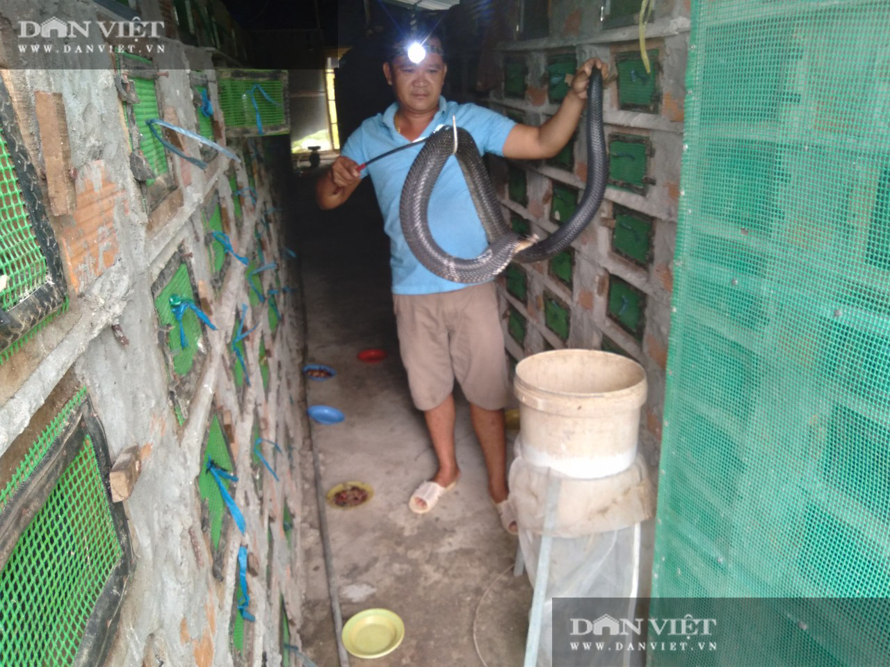 Có gì bên trong trại nuôi rắn hổ mang quy mô lớn ở tỉnh Sóc Trăng? - Ảnh 2.