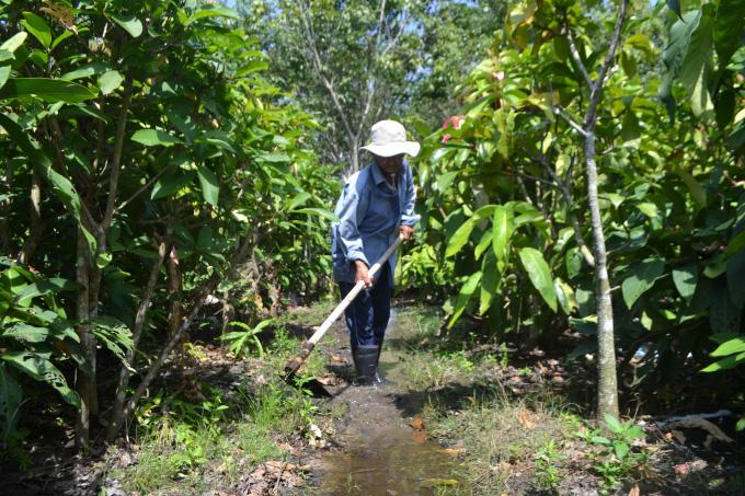 Tây Ninh: Trồng những cây rau rừng tốt um tùm, rộng mênh mông, nông dân ở đây chăm nhàn mà thành tỷ phú, triệu phú - Ảnh 3.