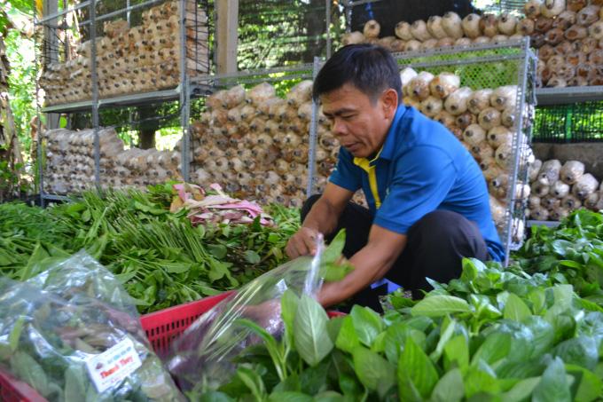 Tây Ninh: Trồng những cây rau rừng tốt um tùm, rộng mênh mông, nông dân ở đây chăm nhàn mà thành tỷ phú, triệu phú - Ảnh 7.