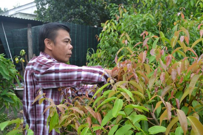 Tây Ninh: Trồng những cây rau rừng tốt um tùm, rộng mênh mông, nông dân ở đây chăm nhàn mà thành tỷ phú, triệu phú - Ảnh 5.