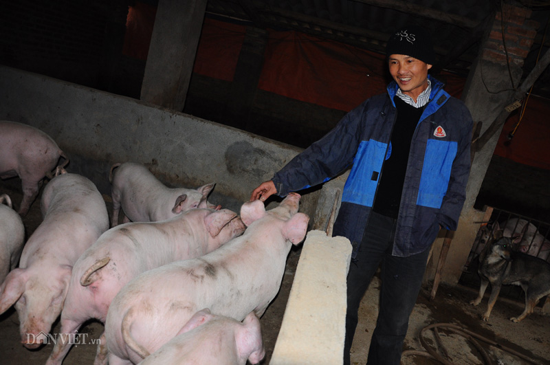Giá lợn hơi hôm nay (30/11): Điều chỉnh nhẹ ở một số tỉnh thành - Ảnh 1.
