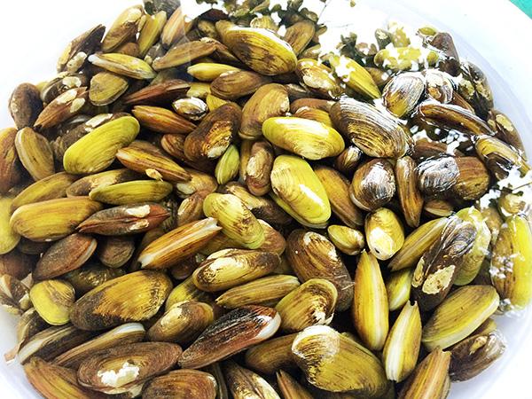 """Nhớ tháng 3 ra sông Đồng Nai bắt sản vật: Loài tôm tít """"nữ hoàng"""" to chà bá, con chem chép vàng như tóp mỡ - Ảnh 3."""