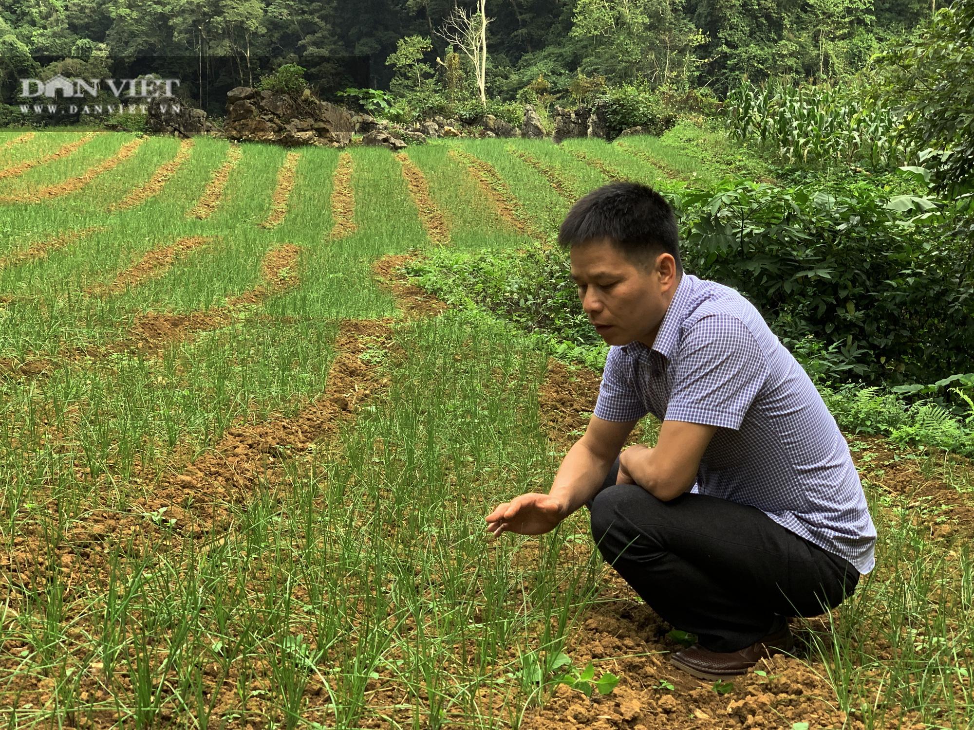 Tránh để phí đất, nông dân Bắc Kạn mang loài cây này về trồng, có thêm thu nhập, không lo đầu ra - Ảnh 5.