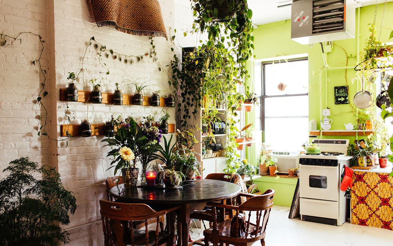 """Nếu khu bếp đặt loại cây phong thủy này, gia chủ sẽ lên như """"diều gặp gió"""" - Ảnh 4."""