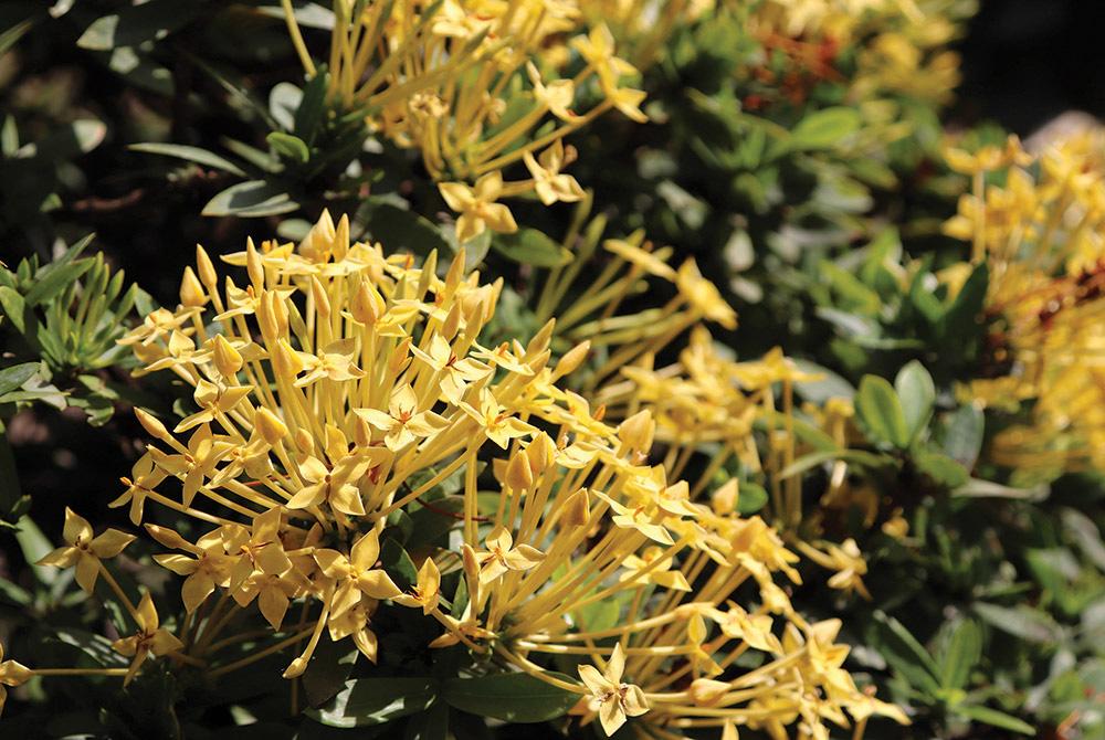 Hơn 20 năm chung thủy chỉ trồng 1 loài hoa rực rỡ này, một ông nông dân tỉnh An Giang sống đời khá giả - Ảnh 1.
