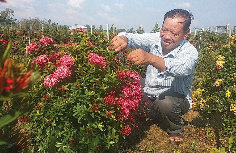 Hơn 20 năm chung thủy chỉ trồng 1 loài hoa rực rỡ này, một ông nông dân tỉnh An Giang sống đời khá giả - Ảnh 4.