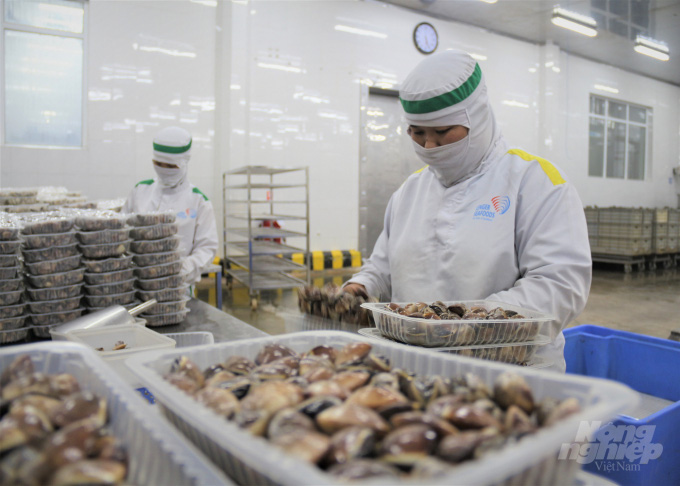 Tìm thị trường tiêu thụ cho 2 loại nhuyễn thể tiềm năng nhất Việt Nam - Ảnh 3.