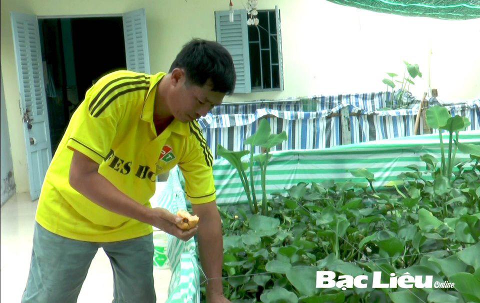 Bạc Liêu: Làm bể lót bạt nuôi loài ốc đặc sản trên cạn, cho ăn trái cây, ông nông dân chăm nhàn mà giàu lên - Ảnh 1.