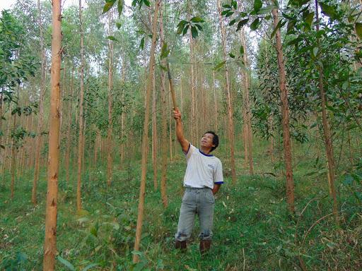 Chiến lược phát triển lâm nghiệp giai đoạn 2021 - 2030: Quan tâm đến nâng cao chất lượng rừng - Ảnh 1.