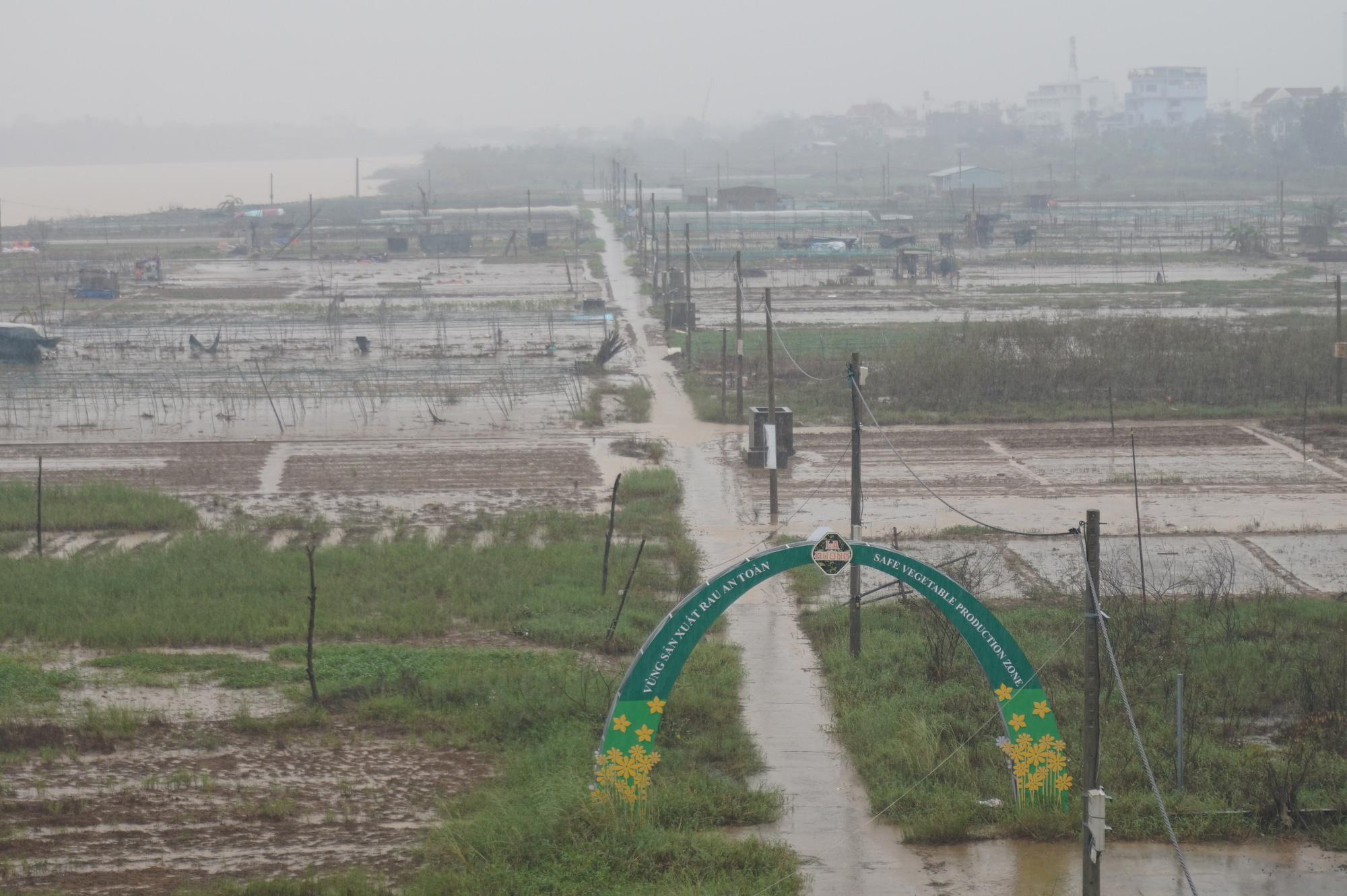 Đà Nẵng: Nông dân trồng rau thấp thỏm tái sản xuất sau mưa lũ dồn dập - Ảnh 1.