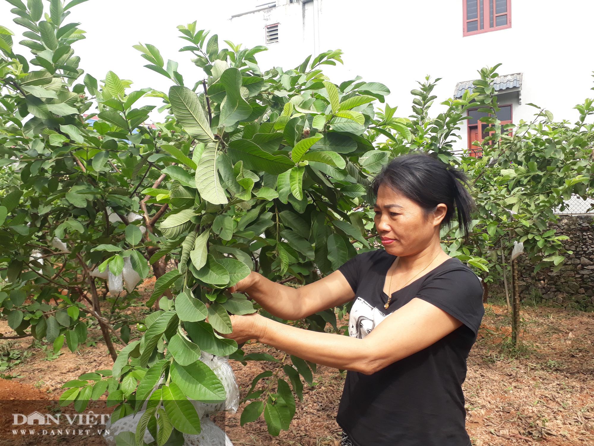 Trồng cây ra quả ngọt quanh năm, vợ chồng anh nông dân Thái Nguyên thu hàng trăm triệu đồng mỗi năm  - Ảnh 5.