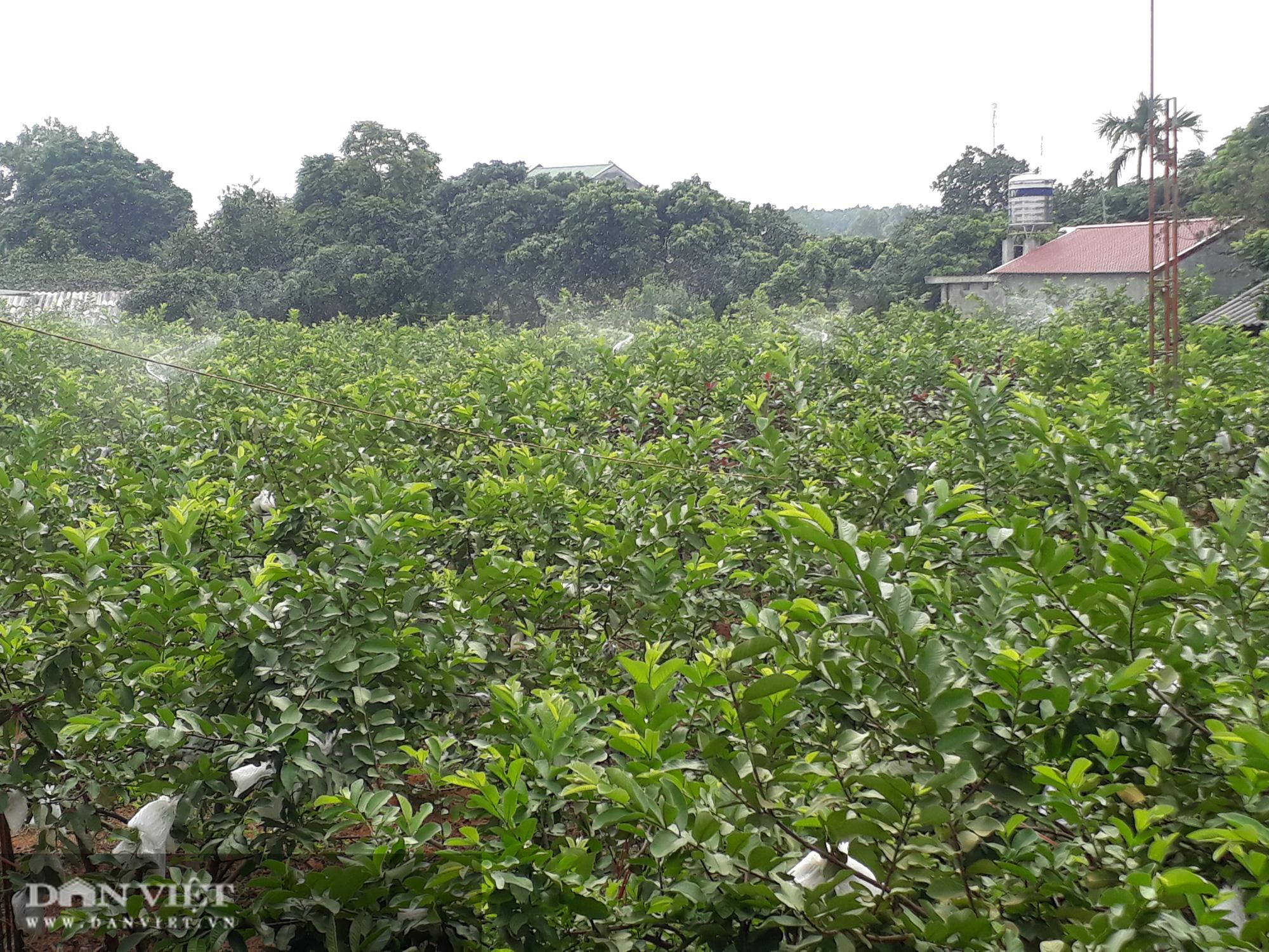 Trồng cây ra quả ngọt quanh năm, vợ chồng anh nông dân Thái Nguyên thu hàng trăm triệu đồng mỗi năm  - Ảnh 2.