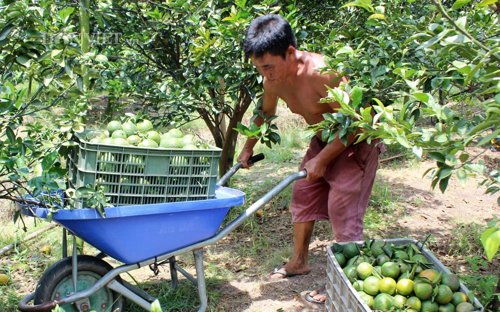 Bình Dương: Nông nghiệp hữu cơ nâng tầm cho trái cây đặc sản - Ảnh 1.