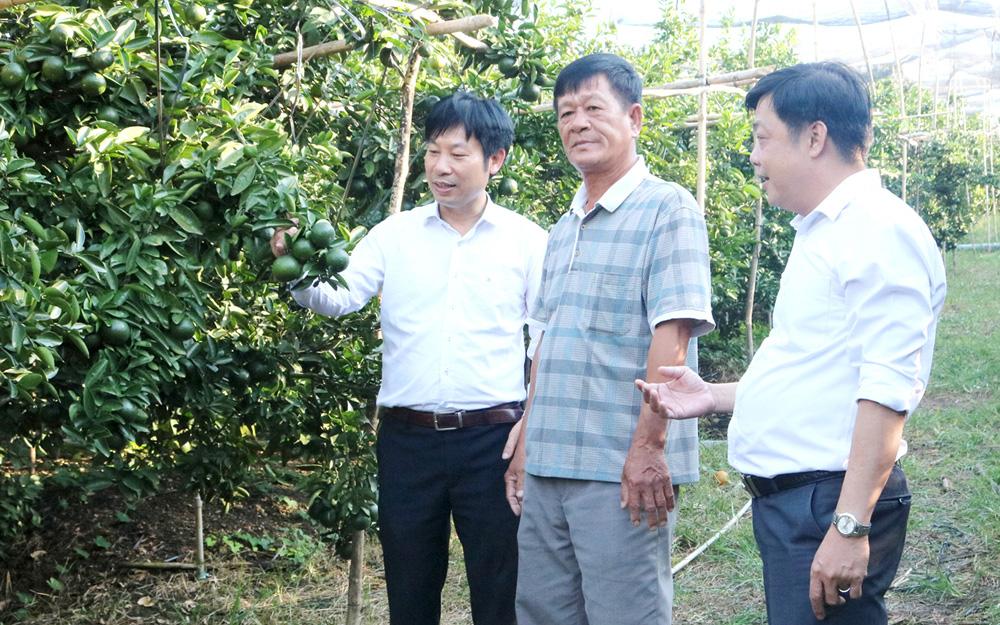 Bình Dương: Nông nghiệp hữu cơ nâng tầm cho trái cây đặc sản - Ảnh 2.