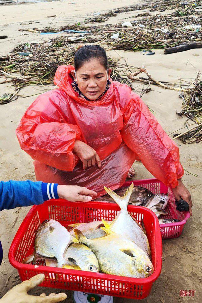 Hà Tĩnh: Tổ dân phố này ra biển đánh bắt, bất ngờ trúng loài cá này ví như lộc biển, thương lái tranh nhau mua - Ảnh 3.