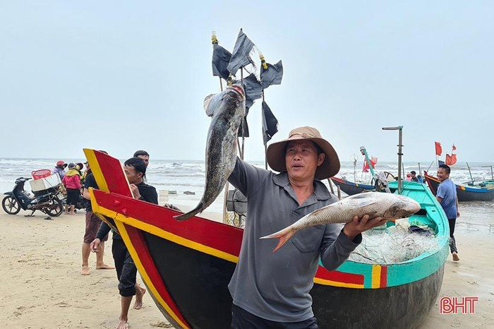 Hà Tĩnh: Tổ dân phố này ra biển đánh bắt, bất ngờ trúng loài cá này ví như lộc biển, thương lái tranh nhau mua - Ảnh 6.