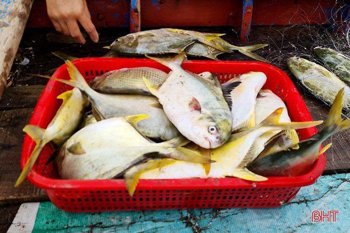 Hà Tĩnh: Tổ dân phố này ra biển đánh bắt, bất ngờ trúng loài cá này ví như lộc biển, thương lái tranh nhau mua - Ảnh 4.