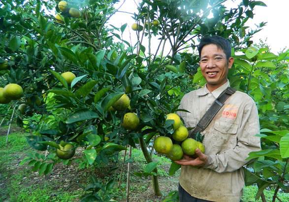 """Nhờ trồng cây nhiều múi, huyện nghèo bỗng chốc xuất hiện nhan nhản triệu, tỷ phú """"chân đất"""" ở Hưng Yên - Ảnh 4."""