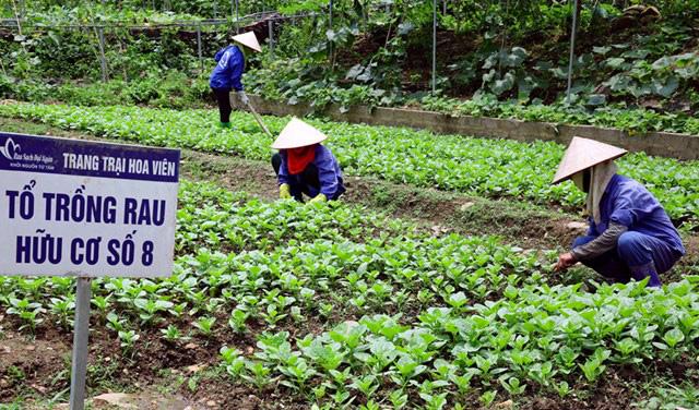 46 tỉnh, thành phố có sản xuất nông nghiệp hữu cơ - Ảnh 1.
