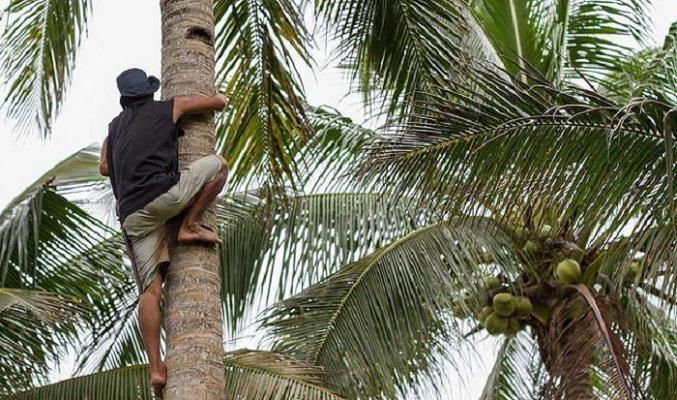 Indonesia cho phép sinh viên gặp khó khăn nộp dừa hoặc nông sản thay học phí - Ảnh 2.
