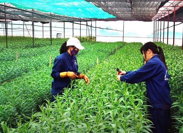 Cách nào minh bạch trong quá trình sản xuất nông sản hữu cơ - Ảnh 1.