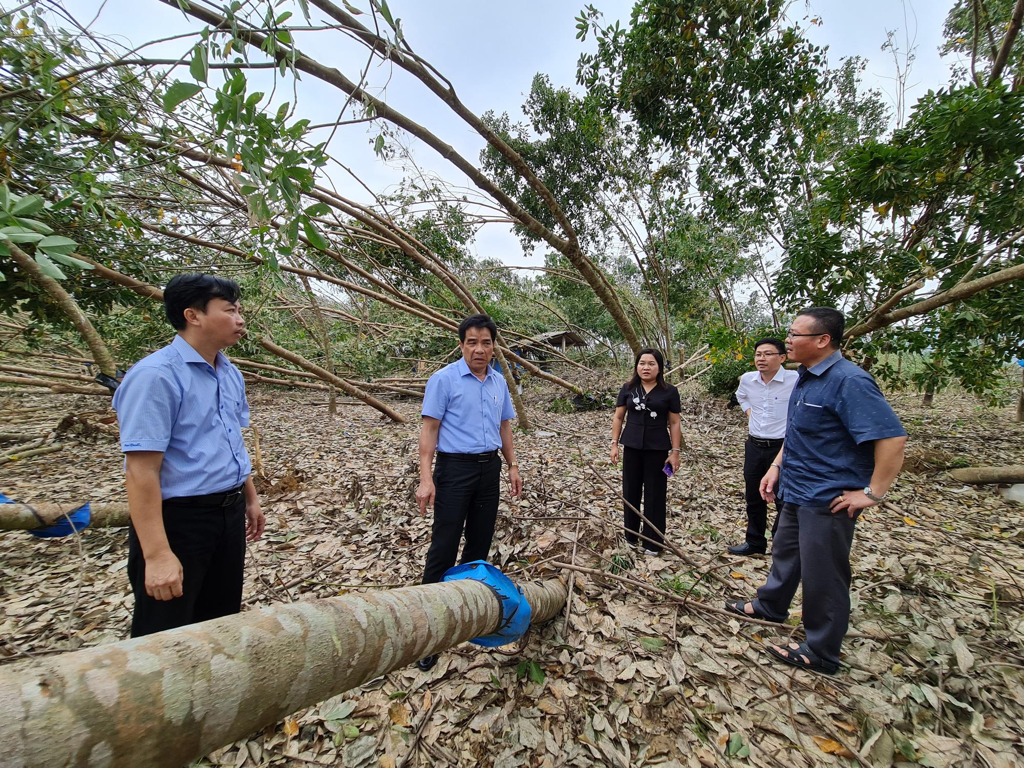 Phó Bí thư Quảng Nam: Đau xót khi nhìn nhà dân, cây ăn quả ngã đổ - Ảnh 6.